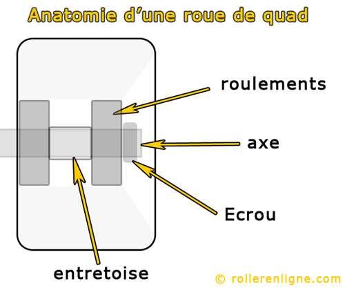 Anatomie d'une roue de roller quad ou patin traditionnel