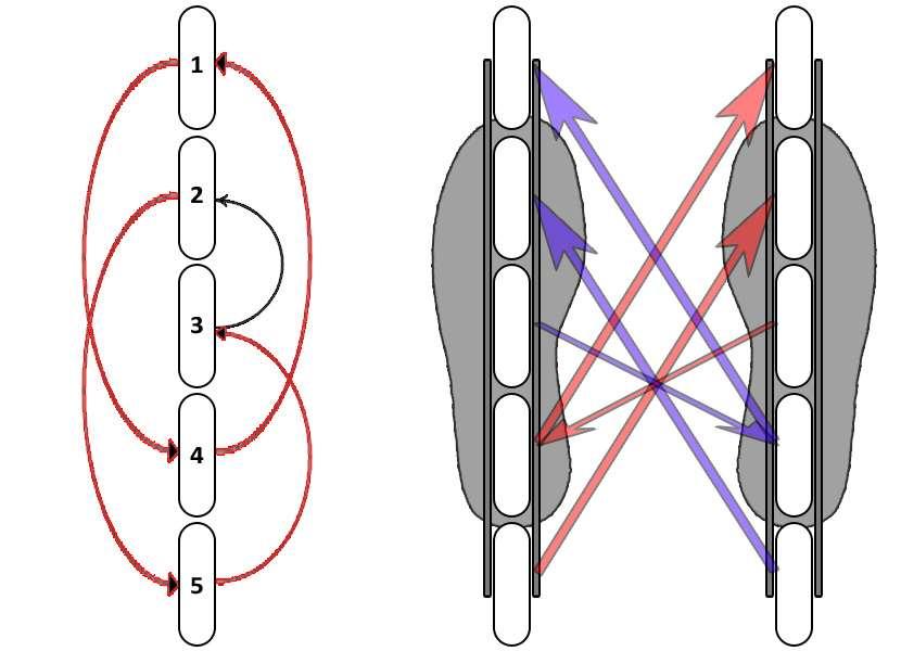 Interversion des roues de roller pour platines à 5 roues