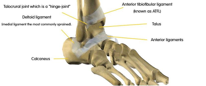 Articulația fasciculului doare. Durerile articulare   Cauze, simptome si tratamente – Voltaren